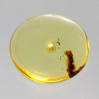 Large Donut shape Baltic amber pendant medallion